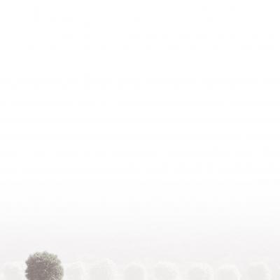 Enkele rouwbrief met boom (620.098)