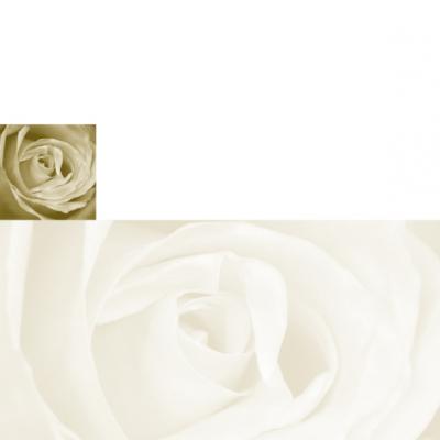 Dubbele plano rouwbrief met roos (636.905)