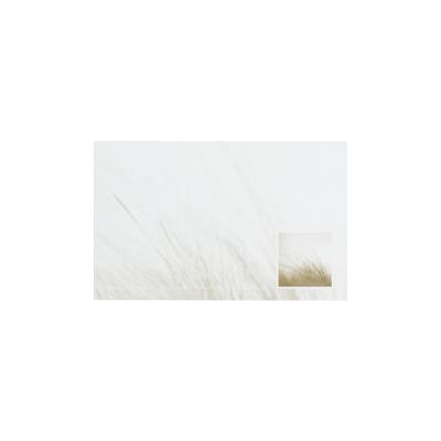 Dankkaart / deelnemingskaart met duingras in coupon van 2 (671.023)